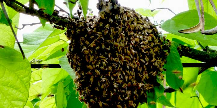 Bees pest removal or relocation for insect control